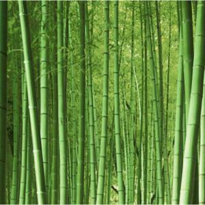 Bambusz félék
